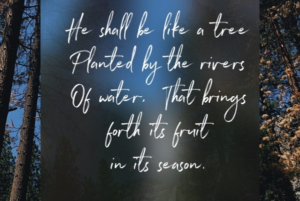 Psalm 1:3 -He shall be like a tree Planted by the rivers of water.