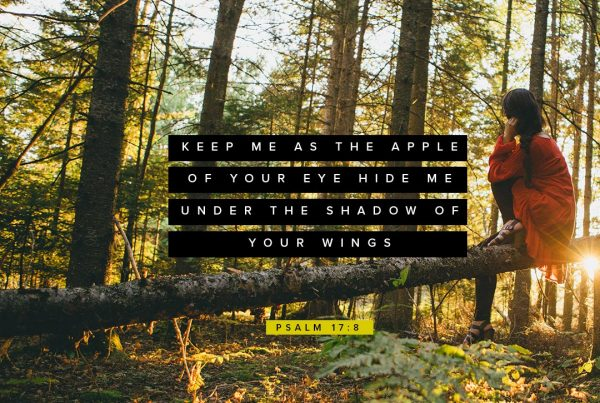 Keep me as the apple of Your eye; Hide me under the shadow of Your wings Psalm 17:8